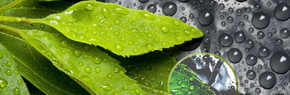 Focus on the Rain Forest